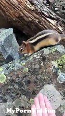 View Full Screen: wild chipmunk eats food from hand.jpg