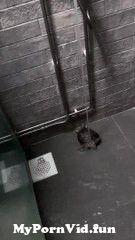 View Full Screen: dancing turtle grooves away in the shower.jpg