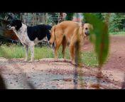 Kh Animal-lover