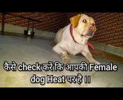 Dog Enquiry