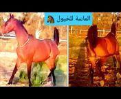 الماسة للخيول Horse lover